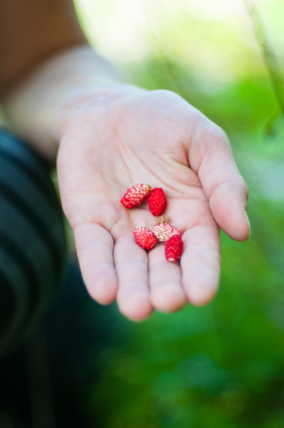 Line finner Markjordbær